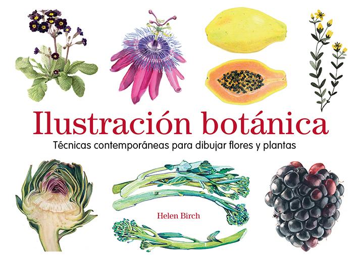 Ilustración botánica - Birch Helen